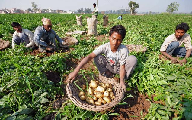 Regulated markets and MSP ensure not just farmers' security but food security: Experts