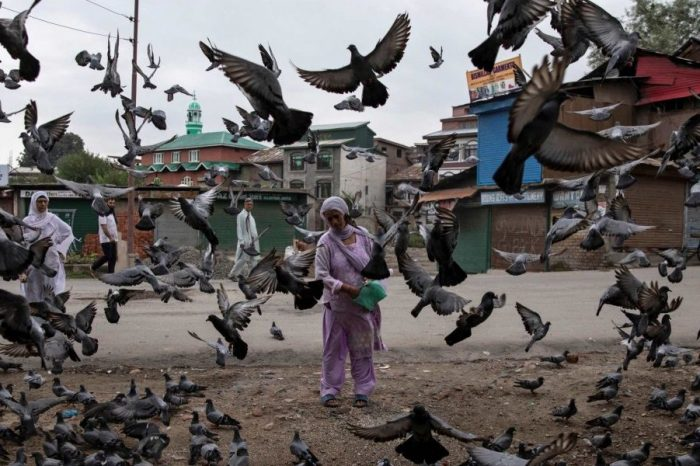 Kashmir: UN Human Rights Experts Express Concern on Domicile Law; 'Baseless' Fears Says India