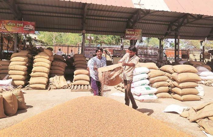 Gujarat: Over 3 lakh farmers register for chana sale MSP