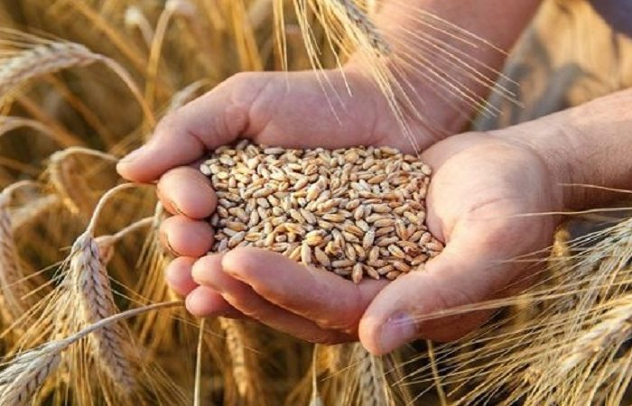 Employees to strengthen farmers' protests during wheat harvest time