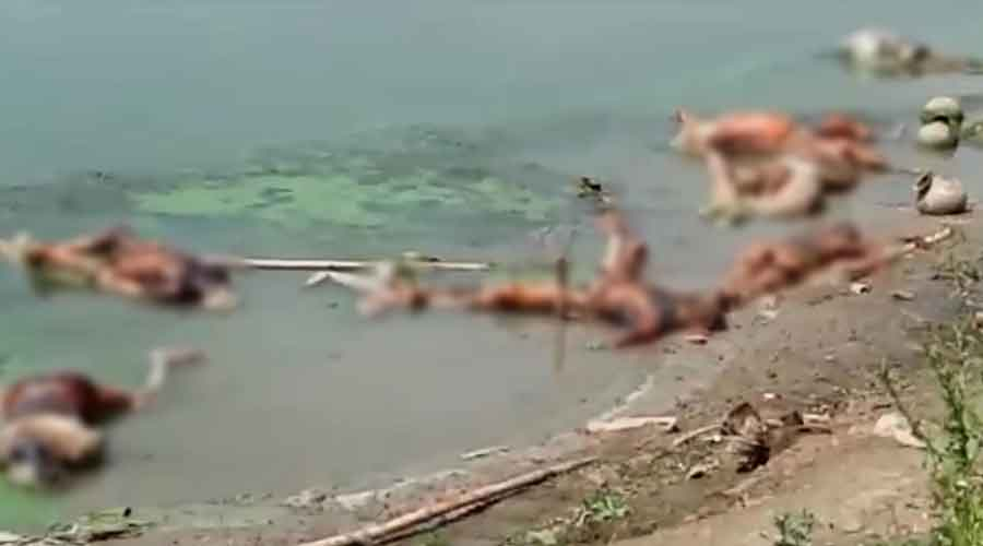 Uttar Pradesh: A dozen more bodies surface in Ganga at Ghazipur